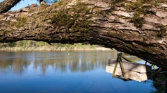 Sun beams on tree and river - stock footage