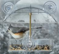 Tufted Titmouse in window bird feeder - stock photo