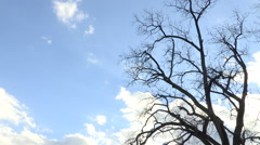 Tree with Timelapse Clouds in Background - stock footage
