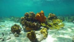 Underwater Caribbean coral reef with fish school Stock Footage