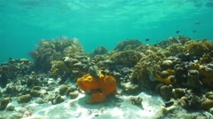 Underwater landscape on seafloor with coral reef Stock Footage