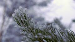 Pine Needles With Snow and Ice - Closeup Slow Motion Stock Footage