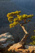 Pine Tree On Cliff Edge Stock Photos