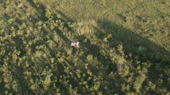Aerial Elephant African Bush Stock Footage