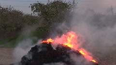 Fire burns to keep apple orchard warm and safe from frost Stock Footage