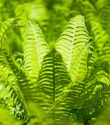 Bright green leaves of a fern as background - stock photo