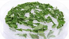 Time-lapse of drying urtica spice UHD-4K Stock Footage