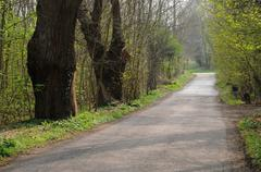 Vernouillet, old trees in rue du Bois de l Aulnay Stock Photos