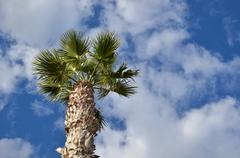 Palm tree from below Stock Photos