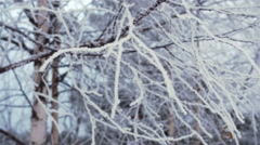 Icy Birch Branches in the Wind - Slow Motion Closeup Stock Footage