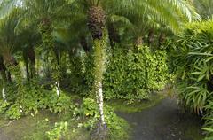 picturesque Habitation Anse Latouche garden in Martinique - stock photo