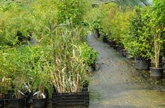 Brittany, le Jardin Lepage in Pleumeur Bodou Stock Photos