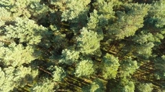Flight over Scots Pine forest in Central Europe Stock Footage