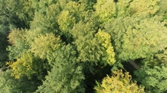 Flying over a deciduous forest in Central Europe Stock Footage