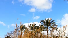 Clouds time lapse  over palm trees and  tall grass Stock Footage