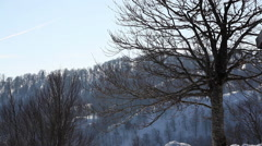 Tree and the mountain in winter time at Kartepe, Izmit Stock Footage