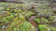 A bog in the bottom of a valley high in the Andes, Ecuador Stock Footage