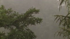 Heavy Rain Bends the Branches of Trees Stock Footage