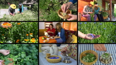 Women gather herbs and drink healthy tea. Video clips collage. Stock Footage