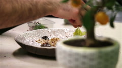 The chef decorates meat salad greens Stock Footage