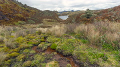 A bog high in the Andes, Ecuador  with a lake in background Stock Footage