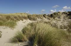Dune of  Stella Plage in Nord Pas de Calais Stock Photos