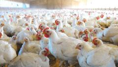 Chicken House - stock footage