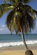 France, Martinique, Salines beach in Sainte Anne Stock Photos