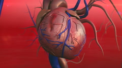 Heart, Human heart model Stock Footage