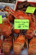 Crustacean Stock Photos