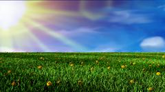 Field of grass and sunny day Stock Illustration
