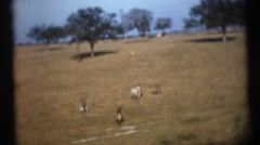 Wild animal park from train window Stock Footage
