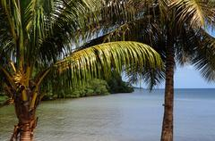 Stock Photo of mangrove swamp in Sainte Rose in Guadeloupe