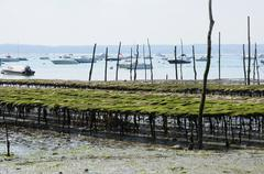 France, oyster farming on the coast of l Herbe Kuvituskuvat