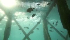 Reef fish swimming under pier in current with ambient light shining through Stock Footage