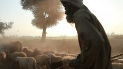 South Asian Farmer tends to his Sheep - stock footage