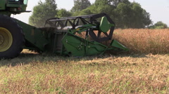 Agriculture combine harvest ripe dry pea plants grow in field Stock Footage