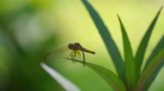 Green Dragonfly On Leaf Stock Footage
