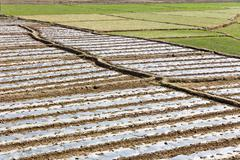 Paddy-field ridge,Traditional farming Stock Photos