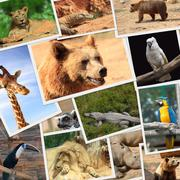 Collection of wild animals photography Stock Photos