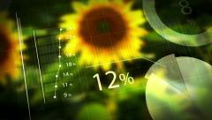 Sunflower Yield, Animated Info Graphics Arkistovideo