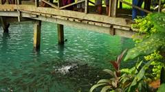 Fish Swarming at Feeding Time at Blue Lagoon Stock Footage