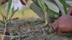 A Farmer Tills the land Stock Footage