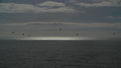 Crows fly over the ocean - Clip Collection Stock Footage