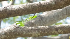 Tree leafs is blown by calm wind Stock Footage