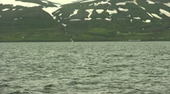 Hunchback Whale tail in Iceland whale watching Dalvik Stock Footage
