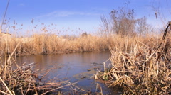 Marshy lake with reeds swamp Stock Footage