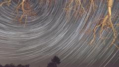 Time lapse of startrails moving across sky in front of tree branches - stock footage
