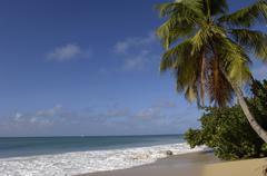 France, Martinique, Salines beach in Sainte Anne - stock photo