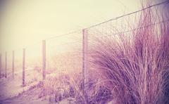 Vintage retro filtered nature background. Stock Photos